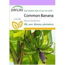 Saflax  - Common Banana - Musa X Paradisiaca - 10 Seeds