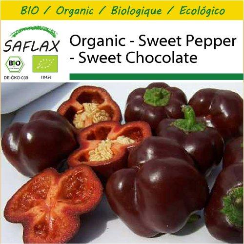 SAFLAX Potting Set - Organic - Sweet Pepper - Sweet Chocolate - 10 certified organic seeds  - Capsicum