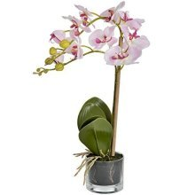 Pink Serenity Potted Orchid -  serenity pink potted orchid