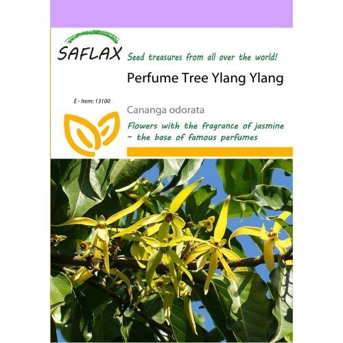 Saflax  - Perfume Tree Ylang Ylang - Cananga Odorata - 10 Seeds