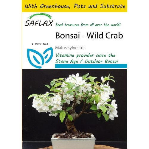 SAFLAX Potting Set - Bonsai - Wild Crab - Malus sylvestris - 30 seeds - With mini greenhouse, potting substrate and 2 pots