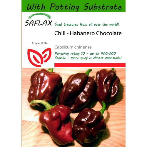 Saflax  - Chili - Habanero Chocolate - Capsicum Chinense - 10 Seeds - with Potting Substrate for Better Cultivation