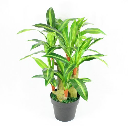 75 cm Artificial Dracena Yucca Plant Tree - Exotic for Home & Office