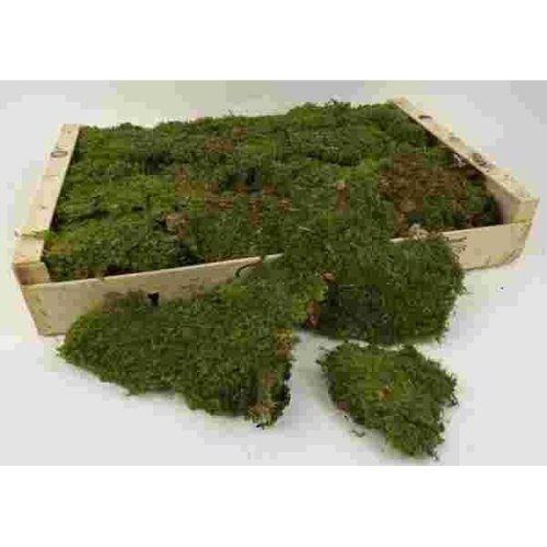 Artificial Flat Moss Box - 1kg, Green