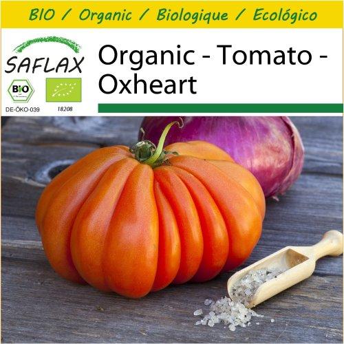 SAFLAX Potting Set - Organic - Tomato - Oxheart - 10 certified organic seeds  - Solanum