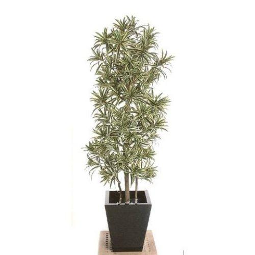 Artificial Silk Dracaena Reflexa Tree IFR