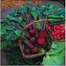 Vegetable - Beetroot - Boltardy - 1000 Seeds