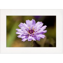 Purple Flower Print in a Textured Card Picture Mount to put into your own frame