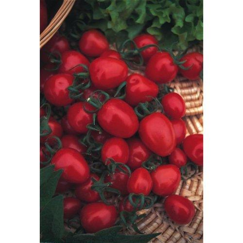 Vegetable - Tomato - Red Alert F1 - 15 Seeds