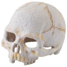 Exo Terra Primate Skull Small for Reptiles