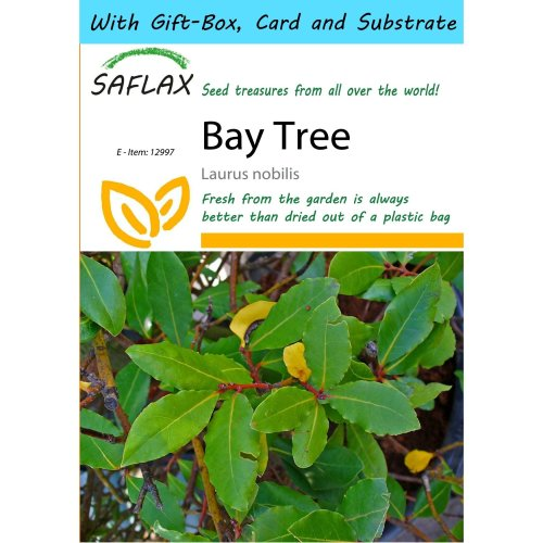 Saflax Gift Set - Bay Tree - Laurus Nobilis - 6 Seeds - with Gift Box, Card, Label and Potting Substrate